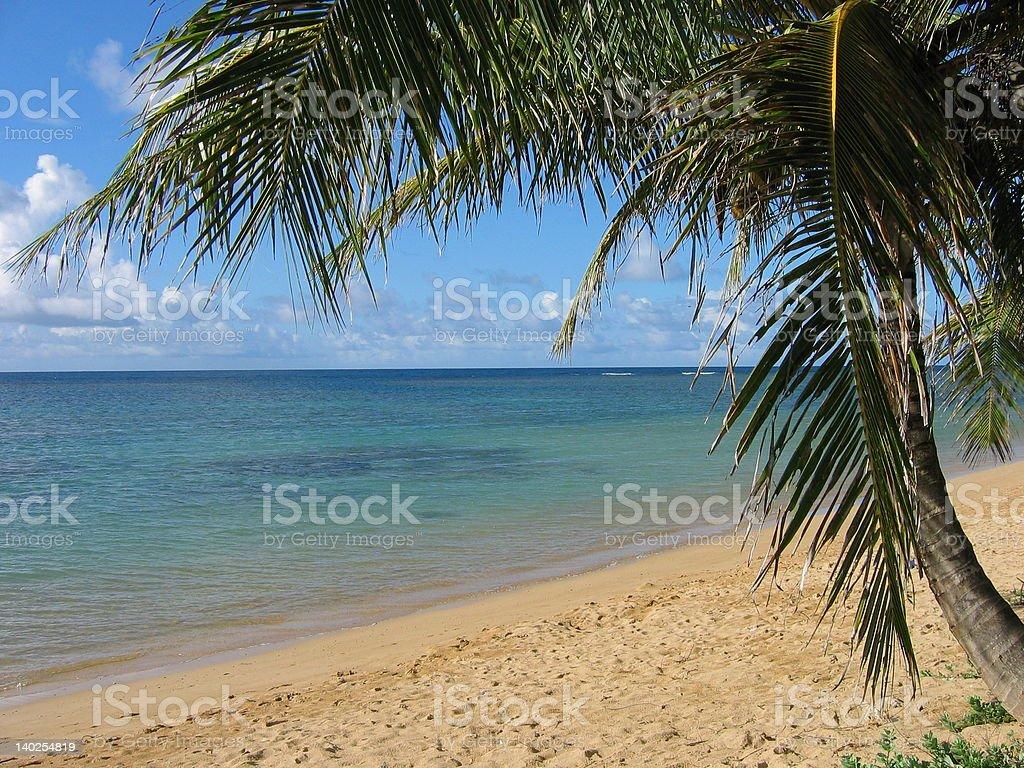Anini Beach Palm Tree stock photo