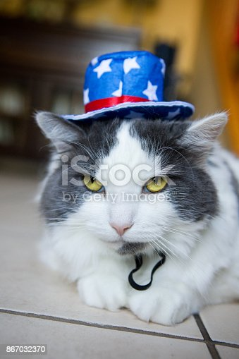490776989 istock photo Annoyed Cat Wearing Patriotic Hat 867032370
