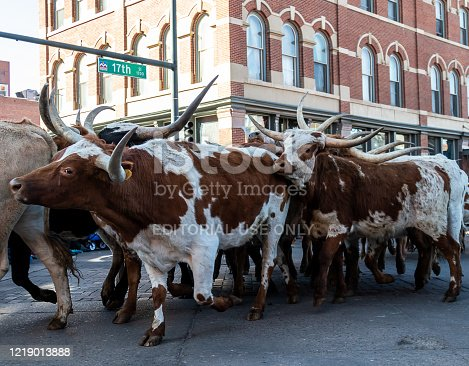 Denver, Colorado - January 9, 2020: Annual National Western Stock Show Kick-Off Parade travels up 17 Street