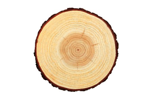 Annual ring, wood texture