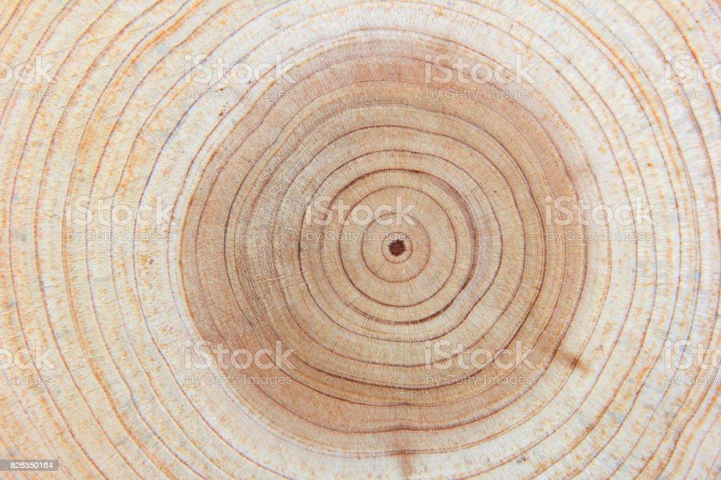 Anillo anual, textura de madera - foto de stock