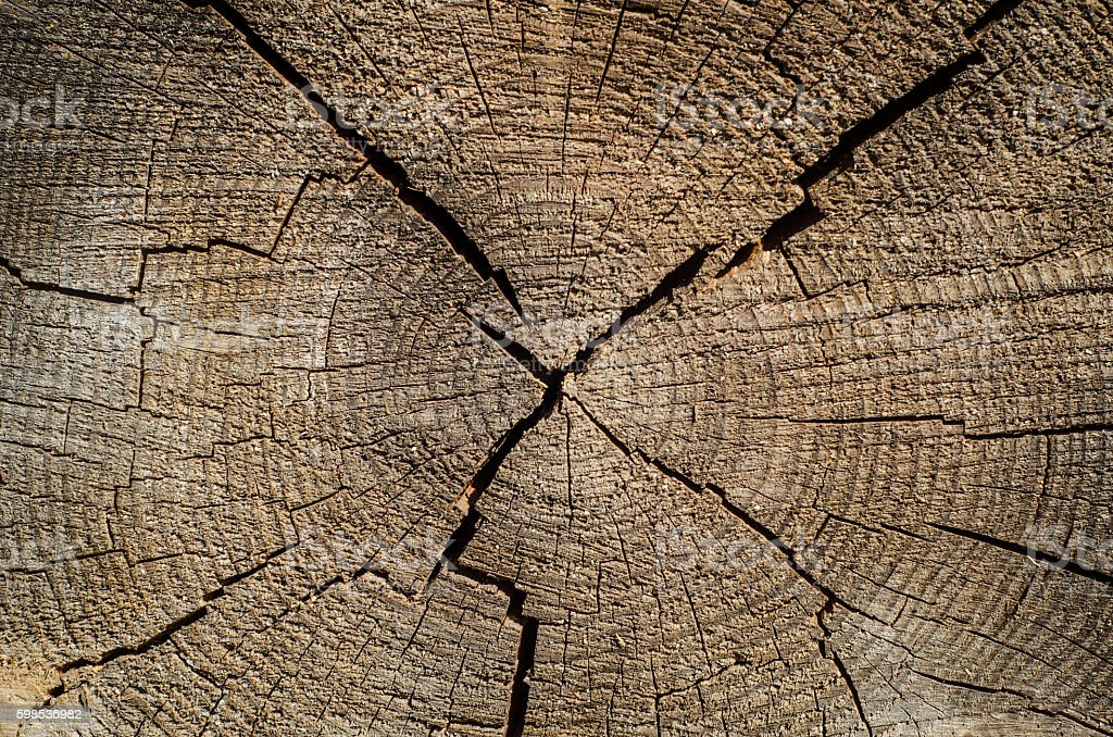 Annual rings, wood texture of cut tree trunk. photo libre de droits