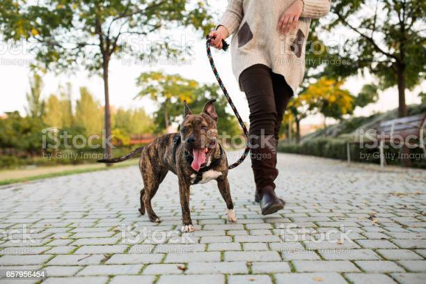 Anonymous woman walking a dog picture id657956454?b=1&k=6&m=657956454&s=612x612&h=k xfsl1qo3oghmit3yxxbminztgoihlu3zuqizkltv8=