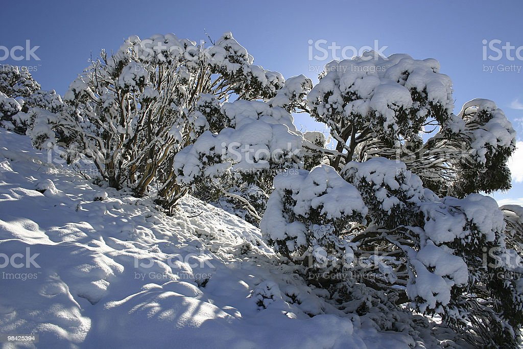Another beautiful day in the snow royalty-free stock photo