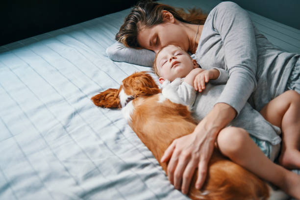 another day another power nap stock photo