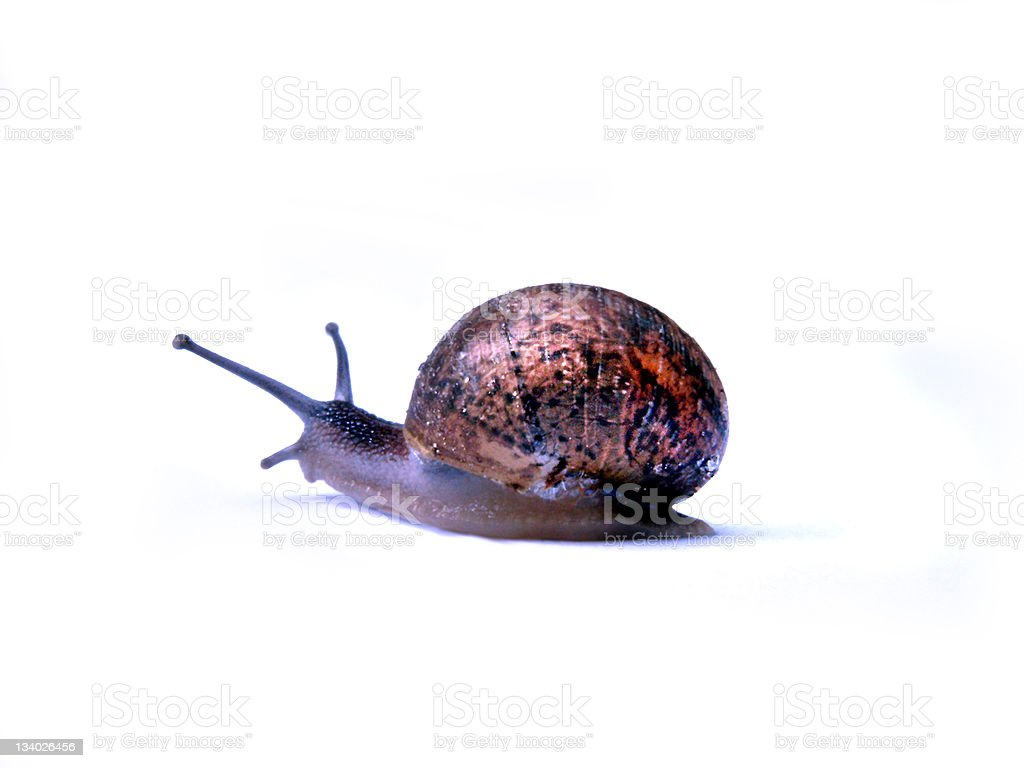 another snail royalty-free stock photo