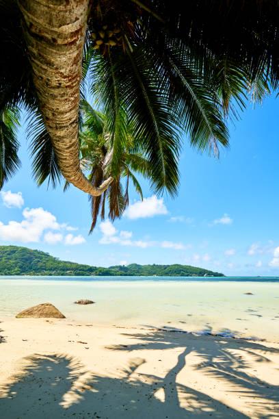 안 라 로얄-열 대 파라다이스 해변 세이셸에서 마헤 섬 - 마헤 섬 뉴스 사진 이미지