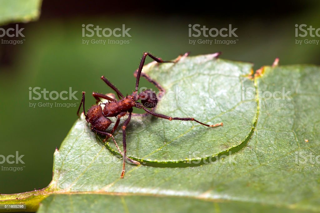 Ant 2 stock photo