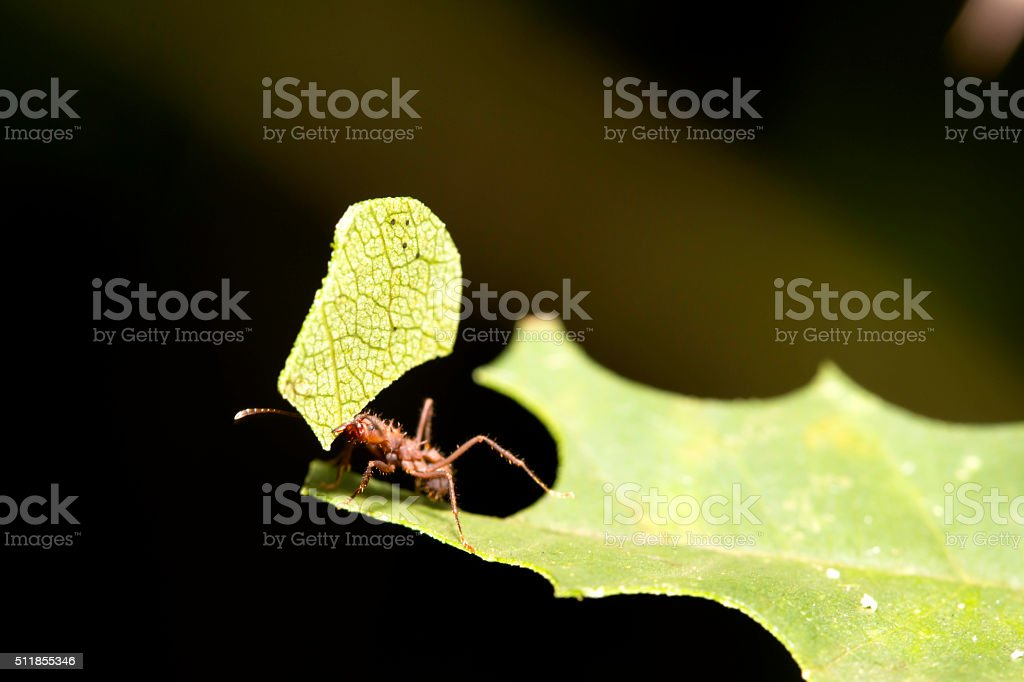 Ant 3. stock photo