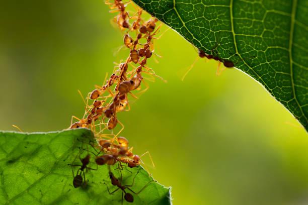 Ameise Aktion stehen. Ant-Brücke-Einheit-team – Foto