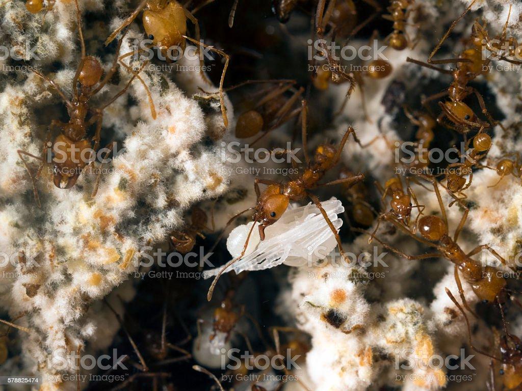 Ant ant bear doll. stock photo