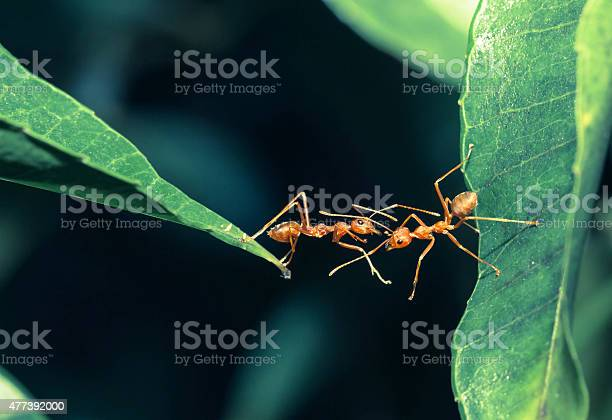 Ant bridge unity picture id477392000?b=1&k=6&m=477392000&s=612x612&h=jll qy4ibklxlqqras m0om4jsl1hymc7h14qpyd090=