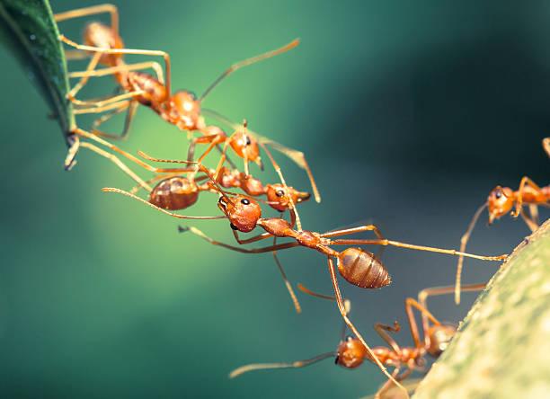 Ant bridge unity foto