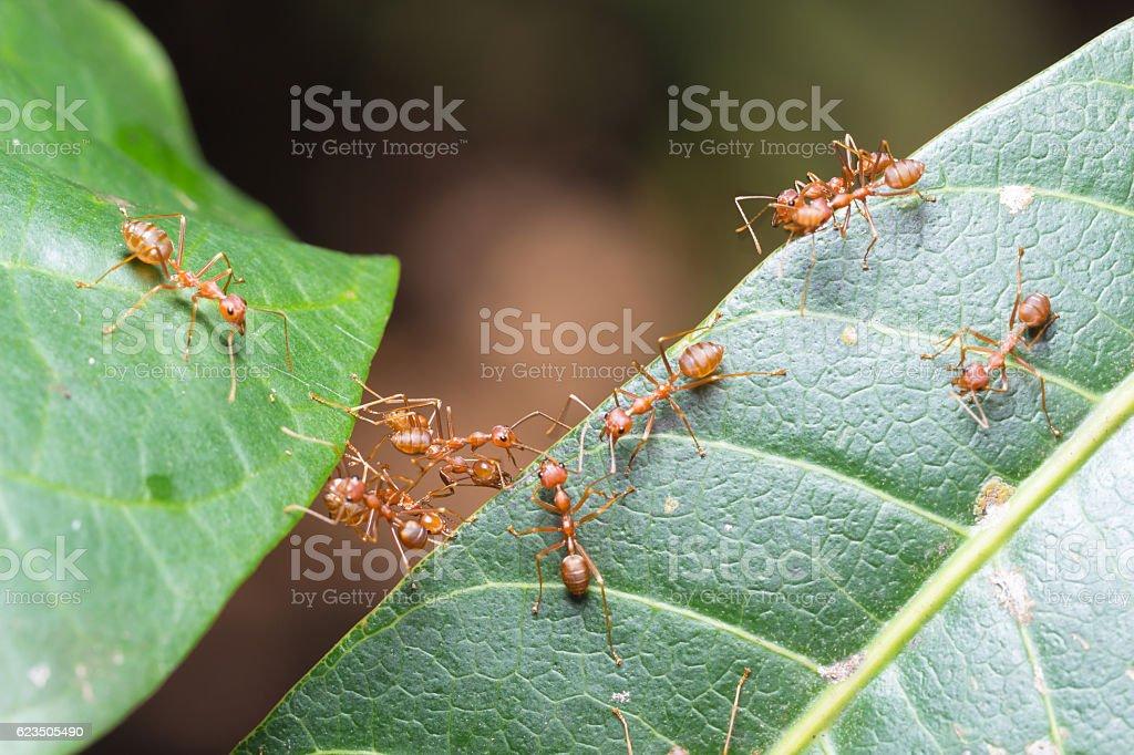 Ant bridge unity team stock photo
