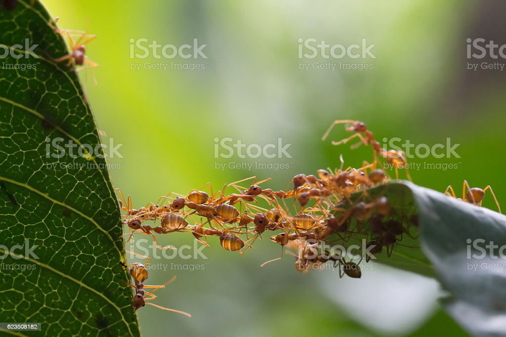 Ant bridge unity team stock photo