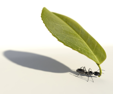 An ant carrying a leaf against a white background. Very high resolution 3D render.