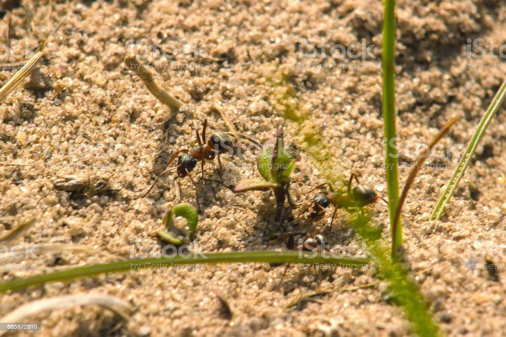 개미 식민지 소나무 나무 장작의 껍질에서 발견 후 분 광 royalty-free 스톡 사진