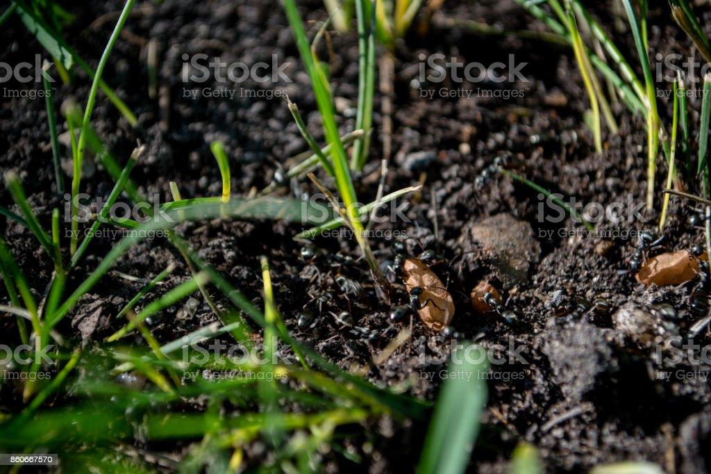 ant eggs stock photo