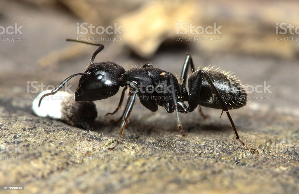 Ant has found food stock photo