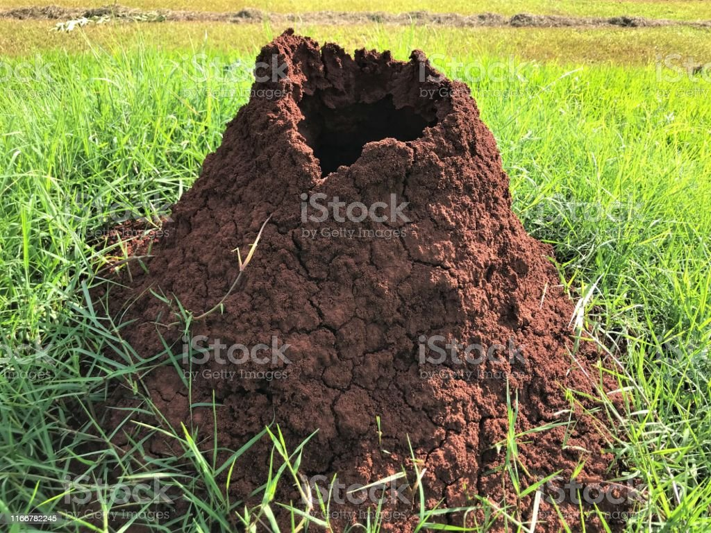 Ant Hill Termite Mound Insect Nest In Grass Closeup Soil Nature Stock Photo Download Image Now Istock