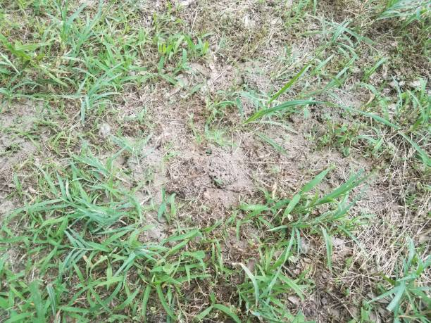 ant hills and ants in green grass stock photo