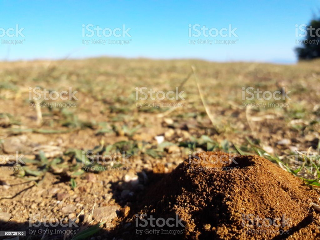 Ant Nest and Nature stock photo