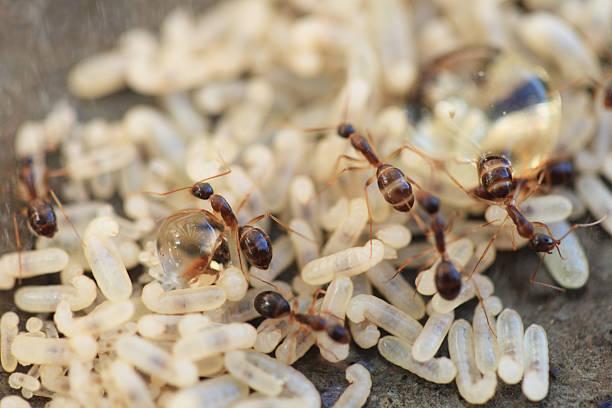 Ant Nest – Foto