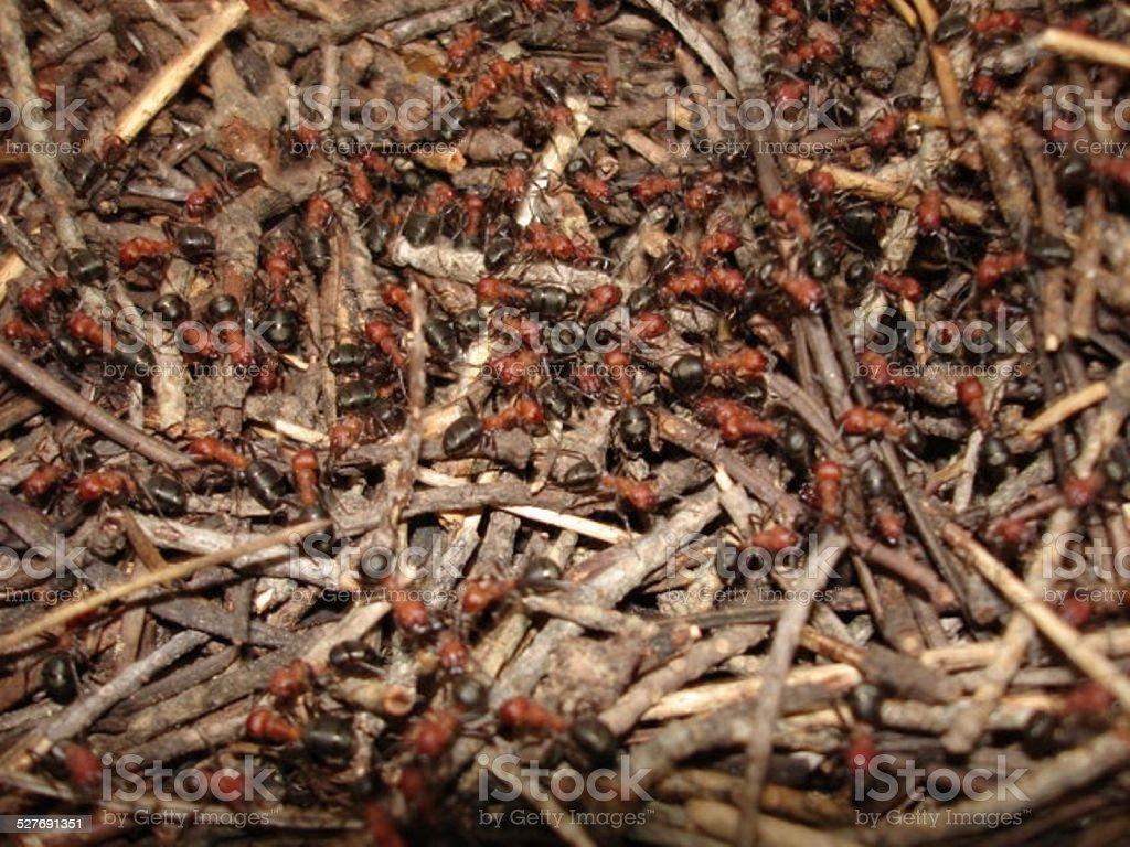ant nest stock photo