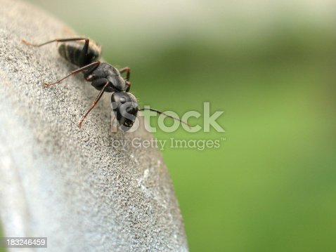 A macro of an ant on a fence with copy space on the right