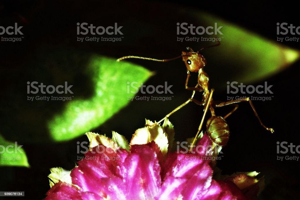 Ant on flower. stock photo