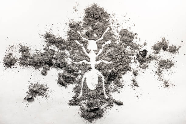 ant or termite silhouette drawing made in ash - ash cross stock photos and pictures