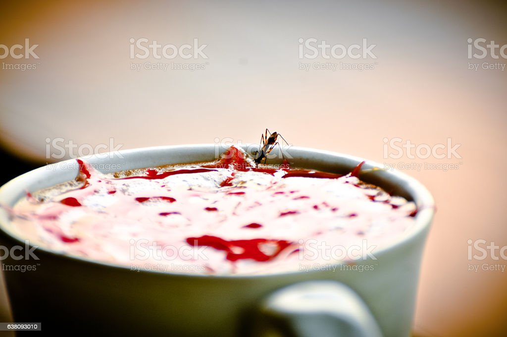 ant Perch on a Glass with syrup and Blurry background stock photo