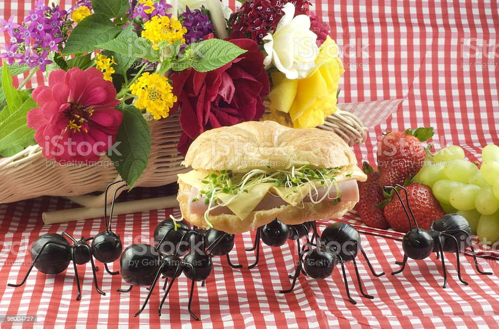 Ant Picnic Invasion royalty-free stock photo