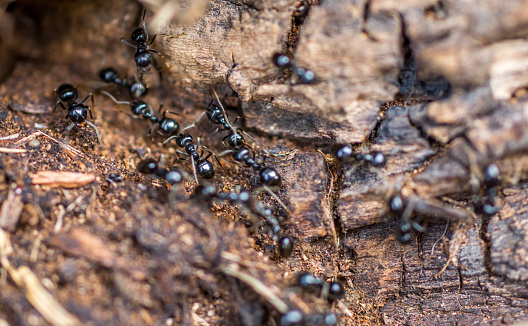 Ant road in closeup