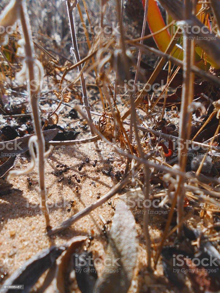 Ant Trail stok fotoğrafı