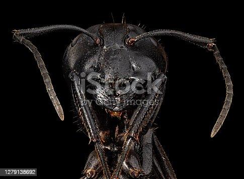 Ant under microscope
