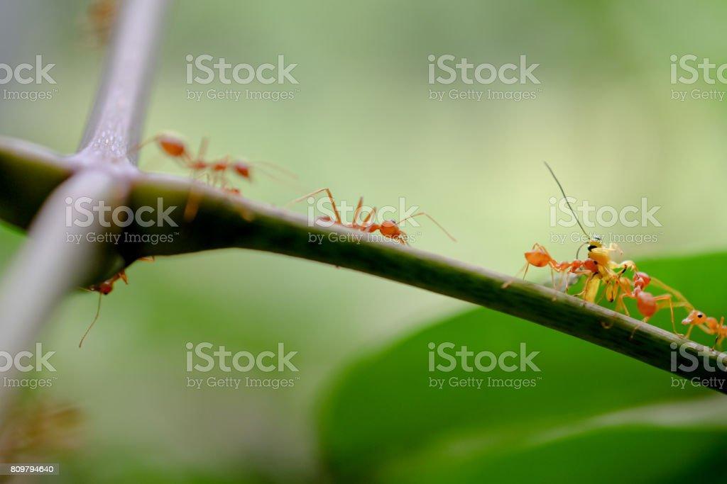 ant wildlife on nature background . stock photo