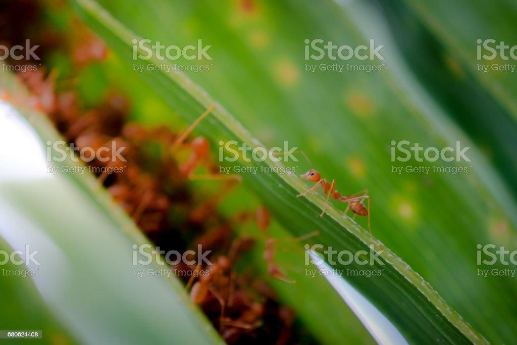 ant wildlife on plant texture . stock photo