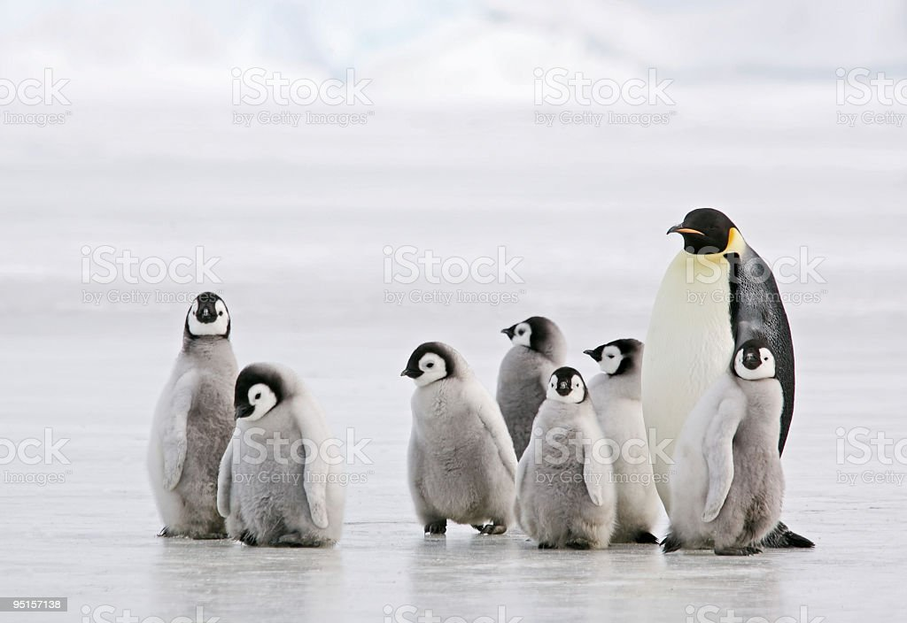 Antarctic Babysitter stock photo