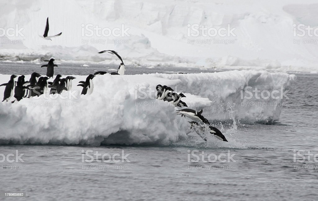 Antarctic Olympics stock photo