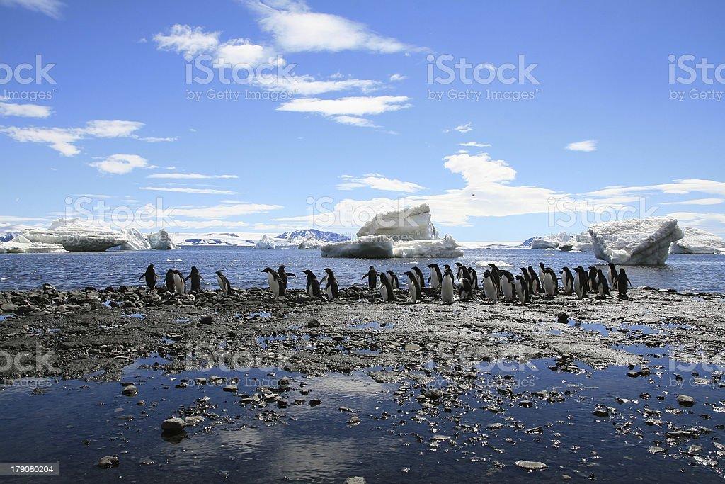 Antarctic scenery stock photo