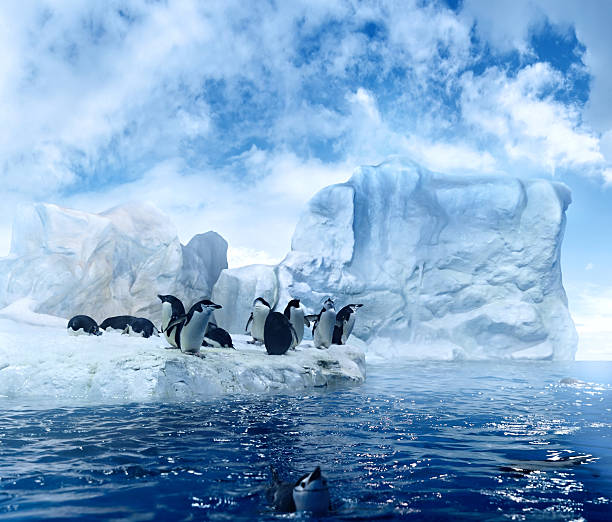 antarctic smalltalk  emperor penguin stock pictures, royalty-free photos & images