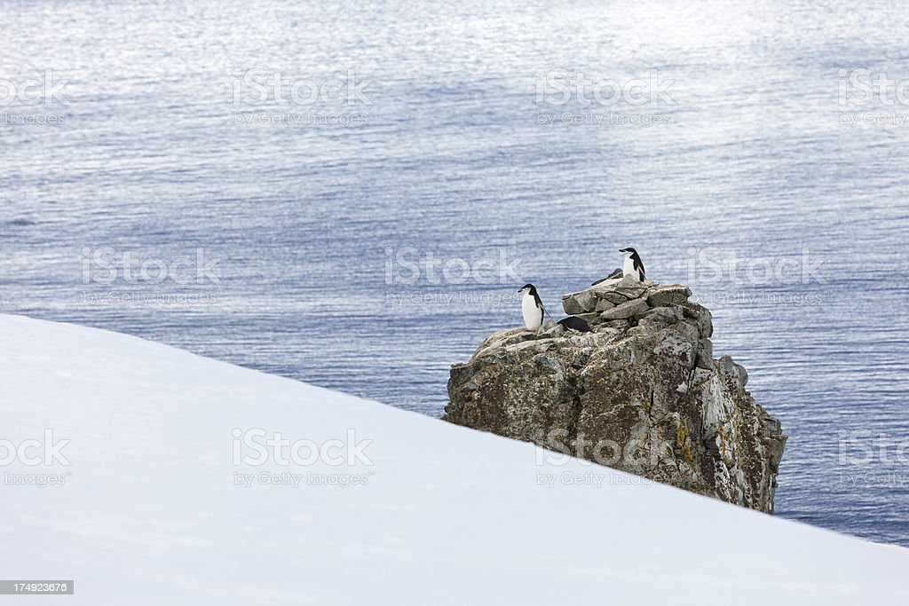 Antarctica chinstrap penguin colony on rock royalty-free stock photo