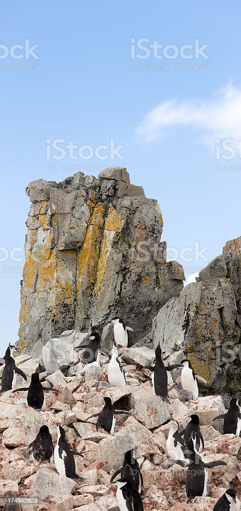 Antarctica chinstrap penguin colony royalty-free stock photo