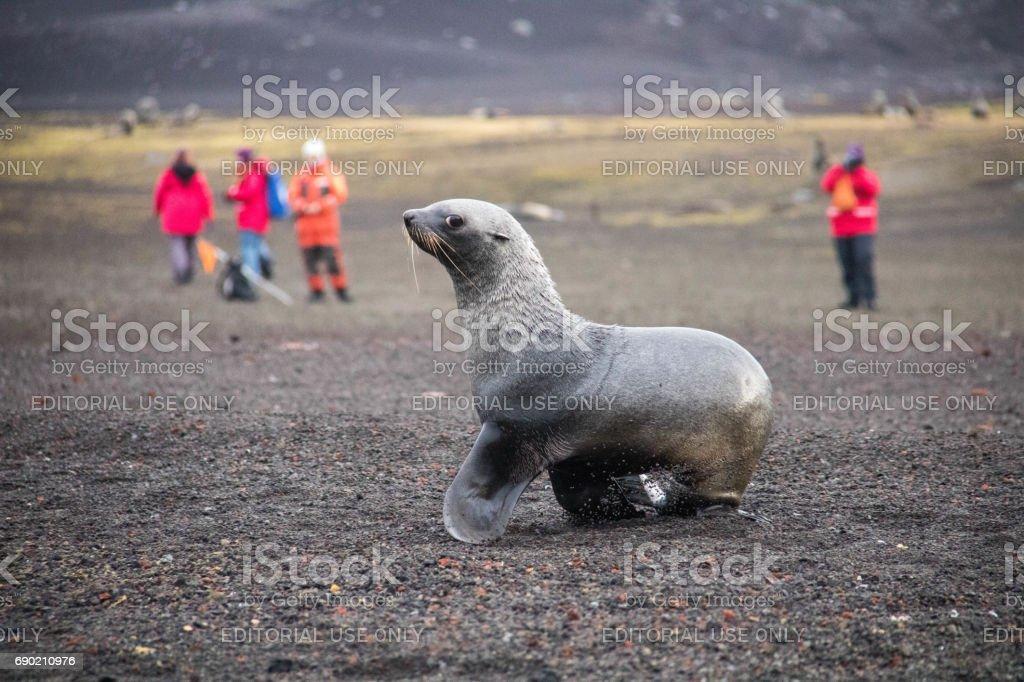 Antarctica: Deception Island stock photo