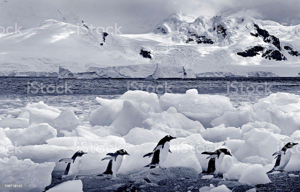 Antarctica in monochrome stock photo