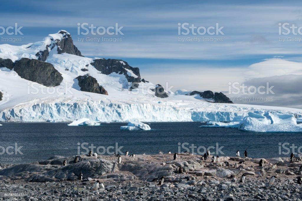 Antarktis Pinguin Land – Foto