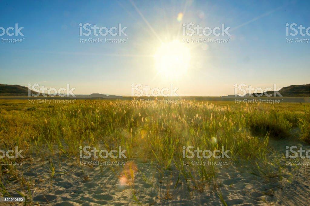 Antelope Island Wheat fields of Utah stock photo