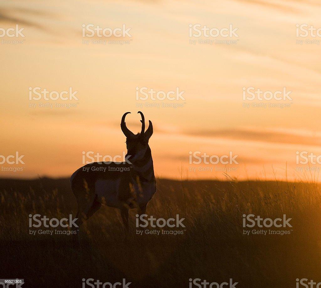 antelope Sonnenuntergang – Foto