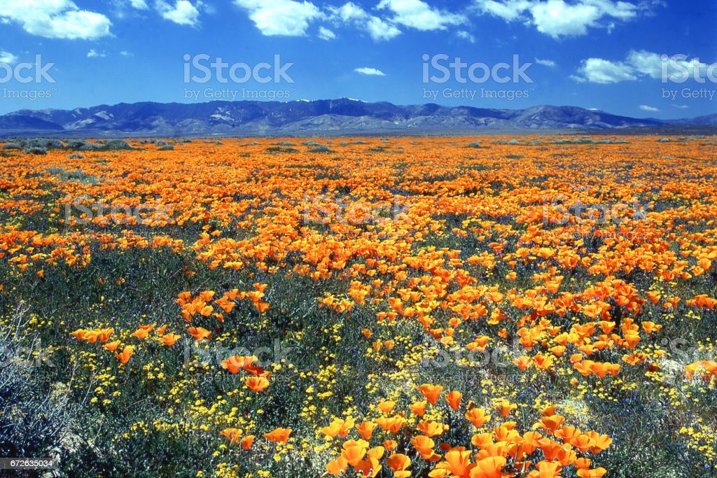 Antelope Valley California Poppy Reserve State Natural Reserve west of Lancaster California stock photo